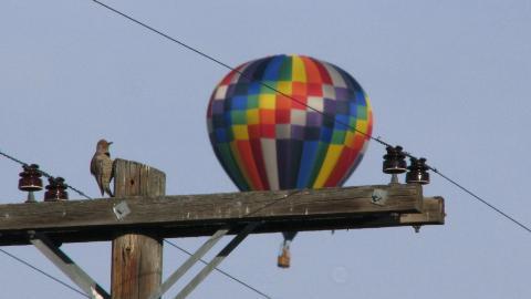 Balloon Fest 3 2010 JP