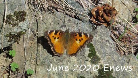 Butterfly 1 JP enews cover
