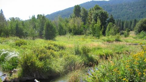 Hancock spring beaver dam