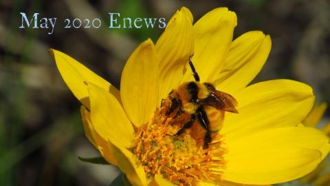 May 2020 enews cover bee JP jpg