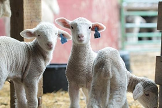 2017 May Conservancy Farm Tour BCS Livestock 0792