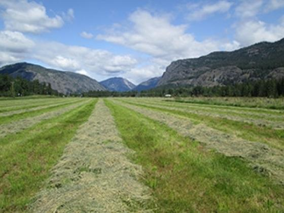 2nd cutting hay Mazama Meadows JD