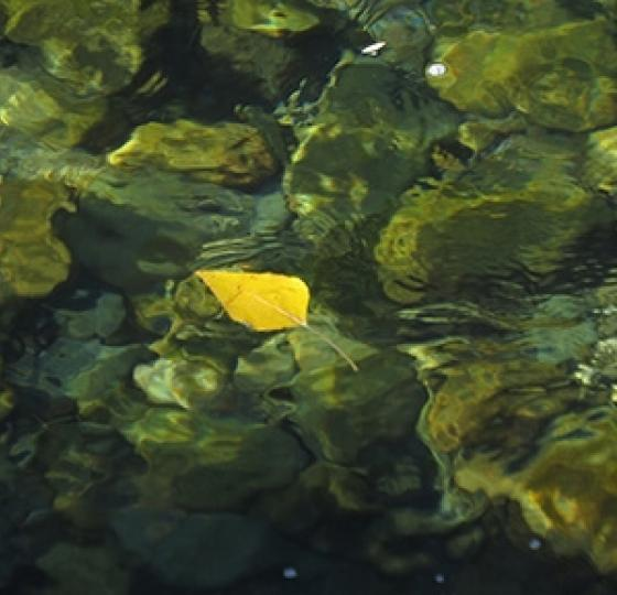 Leaf3 jason paulsen smaller