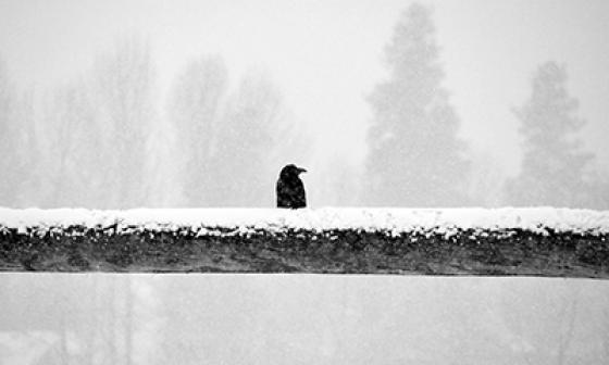 Raven on Rail by Mary Kiesau small