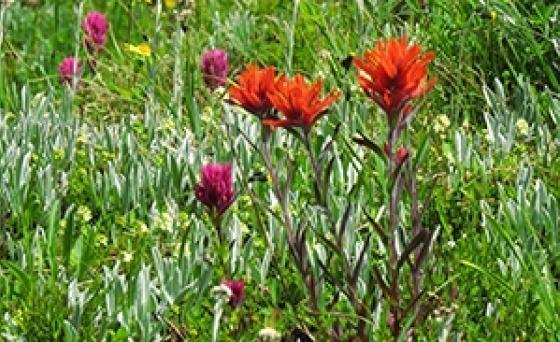 Jp wildflowers bursting