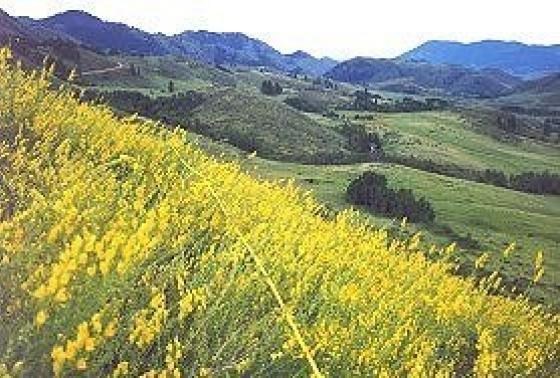 Toadflax slope1