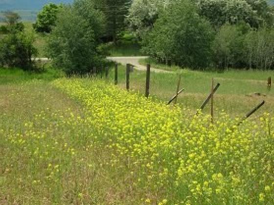Tumble mustard fence1
