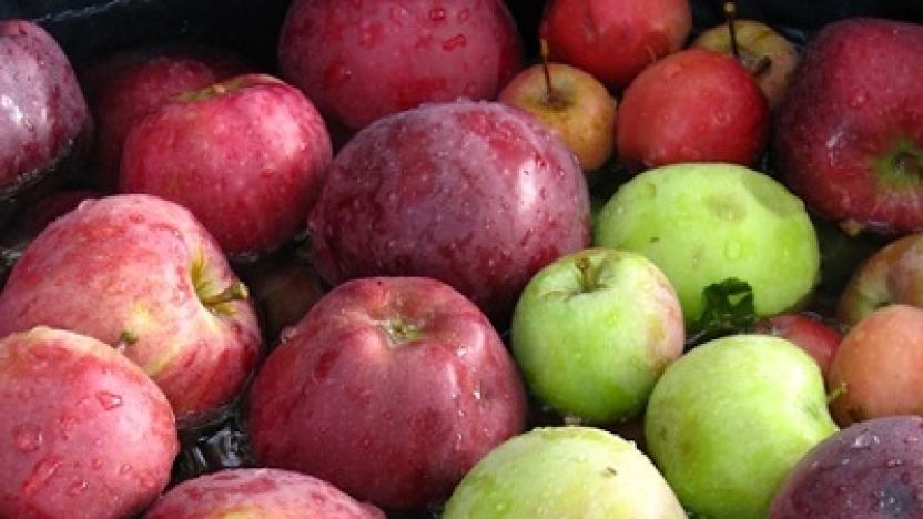 Did You Know? -- What an Apple Maggot Quarantine Means