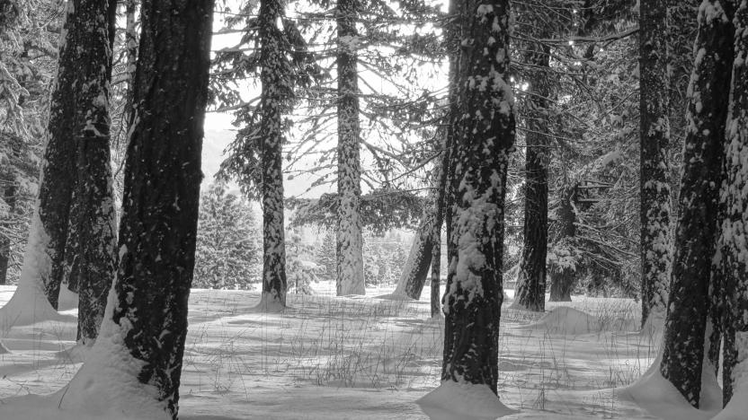 First Tuesday on a Thursday: January 3: Citizen Scientists and Seasonal Snow Modeling with David Hill