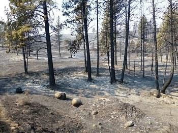 Burned pines bevis